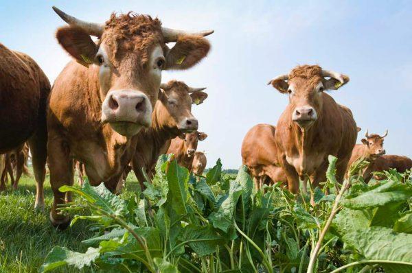 Vlees Bestellen Eerlijk Ambachtelijk (2)